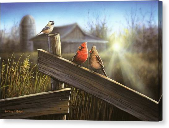 Morning Song Canvas Print