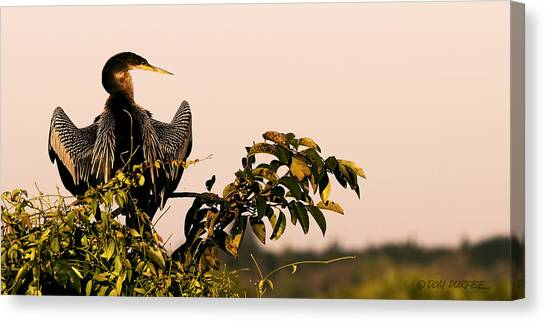 Canvas Print - Morning Stretch by Don Durfee