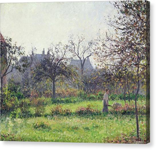 Fruit Trees Canvas Print - Morning Sun by Camille Pissarro