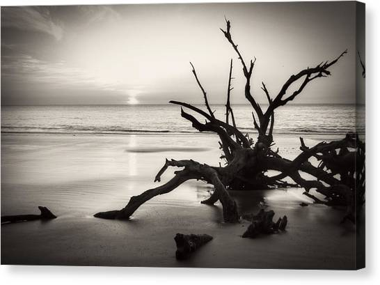 Morning Sun On Driftwood Beach In Black And White Canvas Print