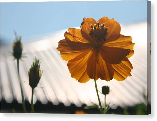 Morning Sunlight Canvas Print by Linda Russell