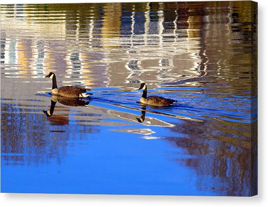 Morning Swim Canvas Print
