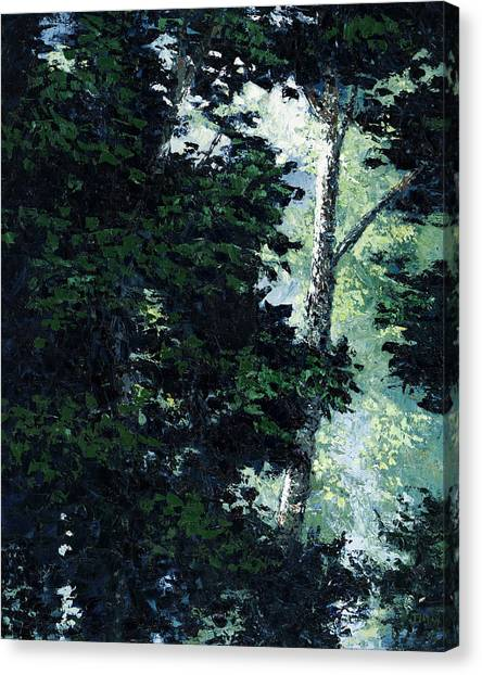 Morning Trees Canvas Print by Paul Illian