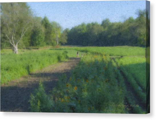 Morning Walk At Langwater Farm Canvas Print