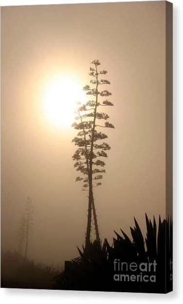 Morning Yucca Canvas Print