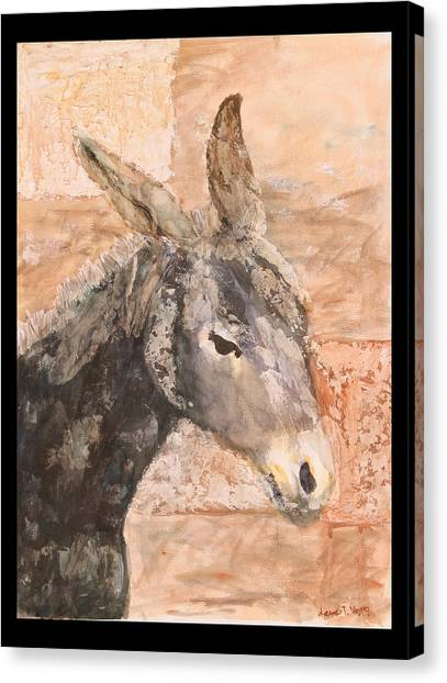 Moroccan Donkey Canvas Print by Laura Vazquez