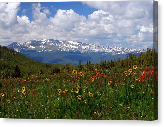 Mt. Massive Canvas Print - Mosquito Sunflowers by Jeremy Rhoades