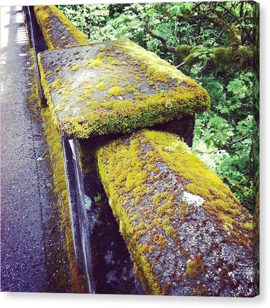 Rainforests Canvas Print - Moss Grows On Everything #moss #bridge by Cassandra Eilidh
