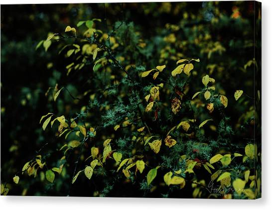 Canvas Print featuring the photograph Moss In Colors by Gene Garnace