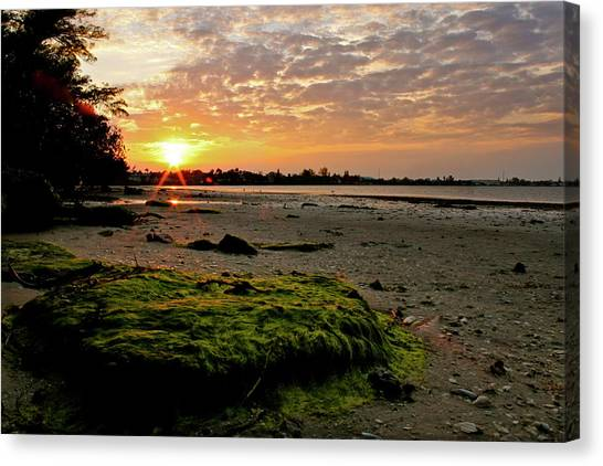 Moss On The Beach Canvas Print by Angie Wingerd