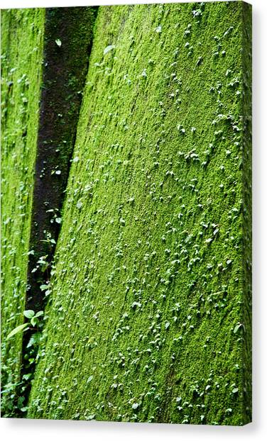 Moss Canvas Print by Pramod Bansode
