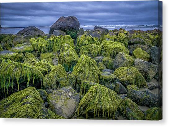 Moss Rocks Canvas Print