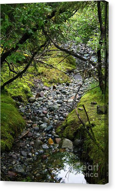 Moss Stream Canvas Print
