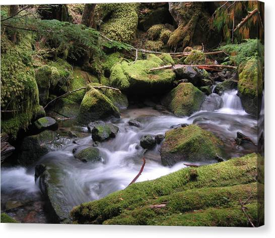 Mossy Forest Canvas Print - Mossy Creek by BC Scenery