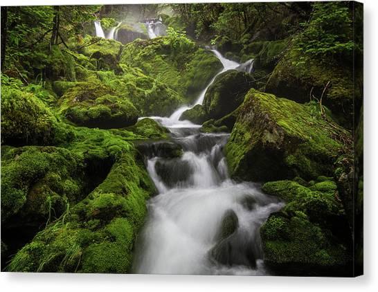Mossy Fall #3 Canvas Print