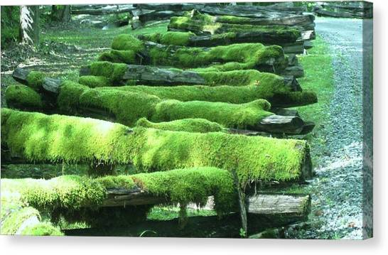Mossy Fence Canvas Print