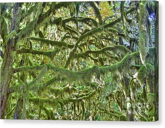 Mossy Maze Canvas Print