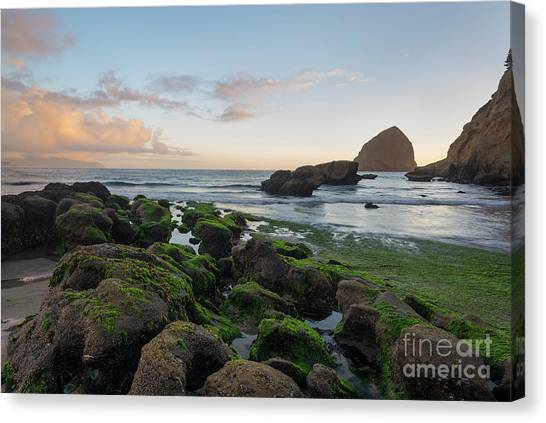 Mossy Rocks At The Beach Canvas Print