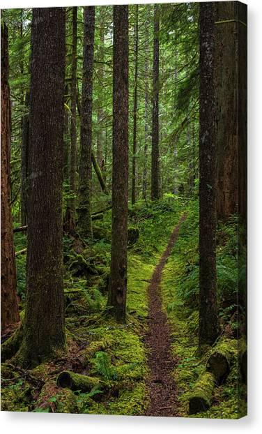 North Souixon Creek Mossy Trail Canvas Print
