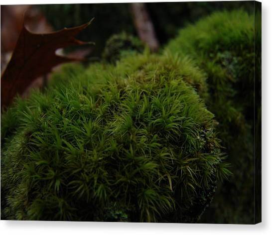 Mossy Wood 003 Canvas Print by Ryan Vaal