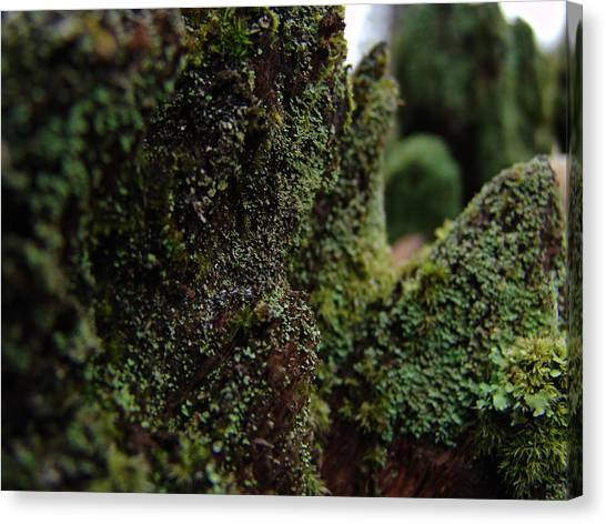Mossy Wood 008 Canvas Print by Ryan Vaal
