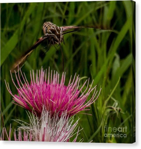 Moth 1 Canvas Print