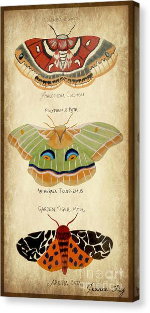 Moth Study Canvas Print