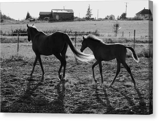 Mother And Baby Canvas Print by J D Banks