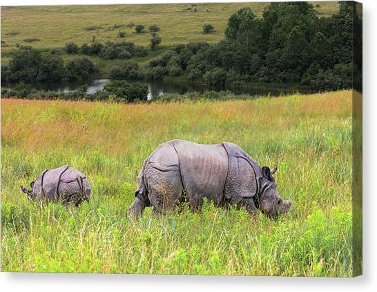 Ohio Canvas Print - Mother And Baby Rhinos by Tom Mc Nemar