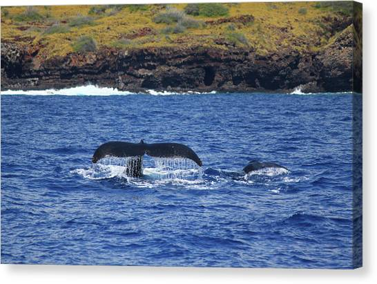 Mother And Calf Whaletails Canvas Print