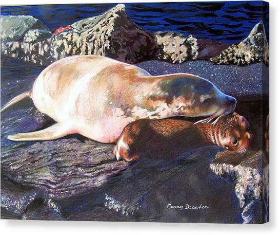 Mother And Child Sea Lion Canvas Print