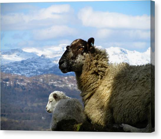 Mother And Lamb Canvas Print