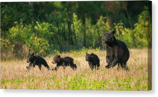 Mother Black Bear And Three Cubs 7006 Canvas Print