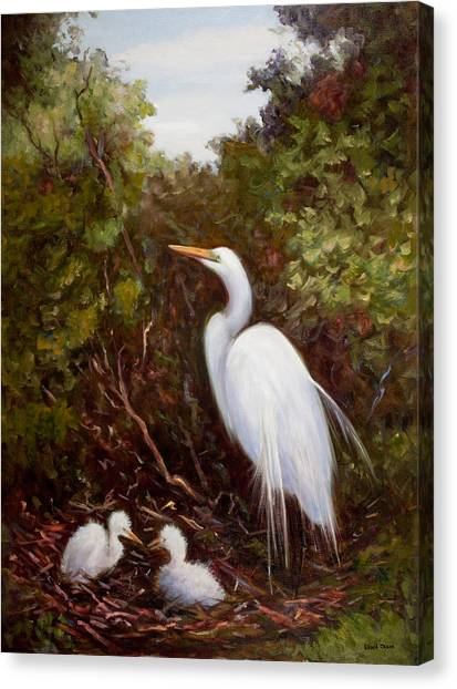 Mother Egret And Nestlings Canvas Print