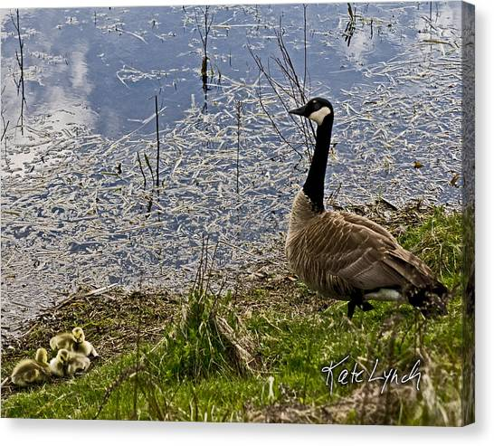 Mother Goose Canvas Print by Kate Lynch