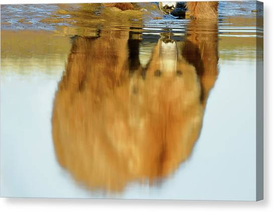 Mother Grizzly Reflection Canvas Print