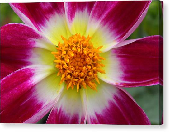 Mother Nature's Masterpiece Canvas Print by Pierre Leclerc Photography