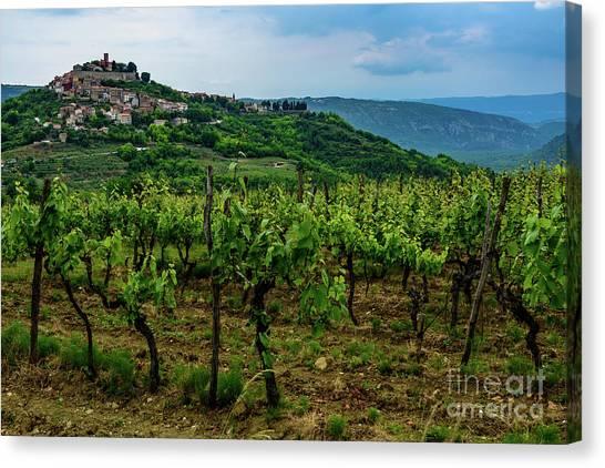 Motovun And Vineyards - Istrian Hill Town, Croatia Canvas Print