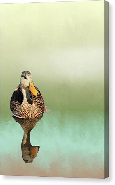 Mottled Duck Reflection Canvas Print