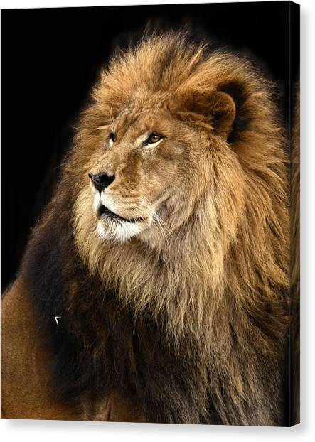 Moufasa The Lion Canvas Print