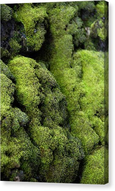 Mounds Of Moss Canvas Print