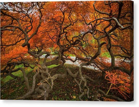 Mount Auburn Cemetery Beautiful Japanese Maple Tree Orange Autumn Colors Branches Canvas Print