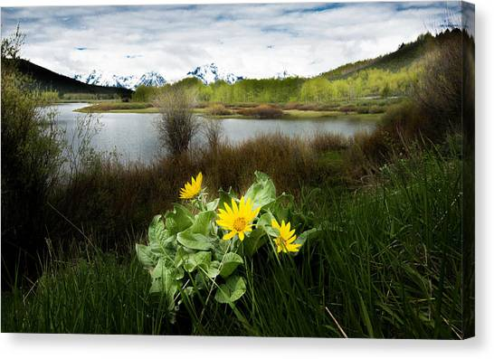 Mount Moran Spring Canvas Print