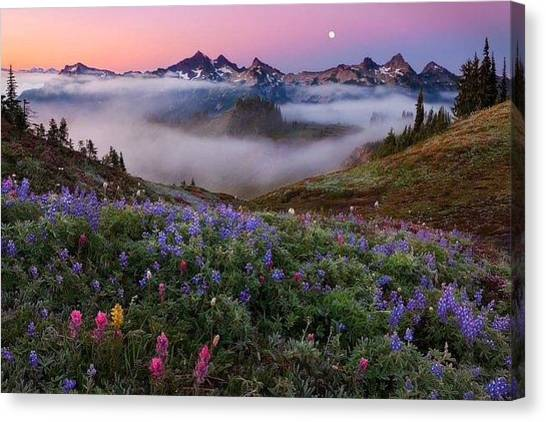 Washington Nationals Canvas Print - Mount Rainier National Park by Andy Bucaille