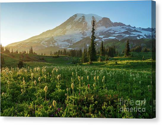 Washington Nationals Canvas Print - Mount Rainier Photography Golden Meadows Of Wildflowers by Mike Reid