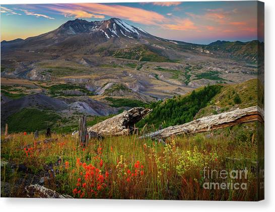 Mount St. Helens Canvas Print - Mount St Helens Paintbrush by Inge Johnsson