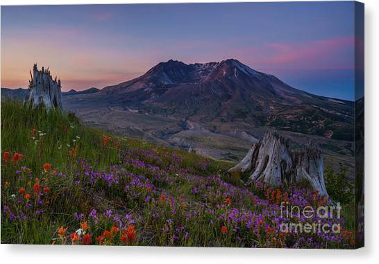 Mount St. Helens Canvas Print - Mount St Helens Spring Colors by Mike Reid