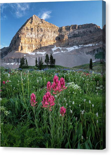 Mount Timpanogos Wildflowers Canvas Print