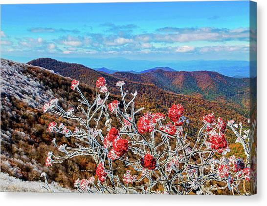 Mountain Ashe Canvas Print