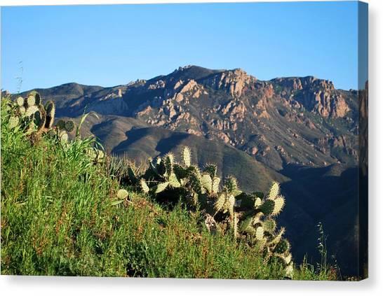 Mountain Cactus View - Santa Monica Mountains Canvas Print
